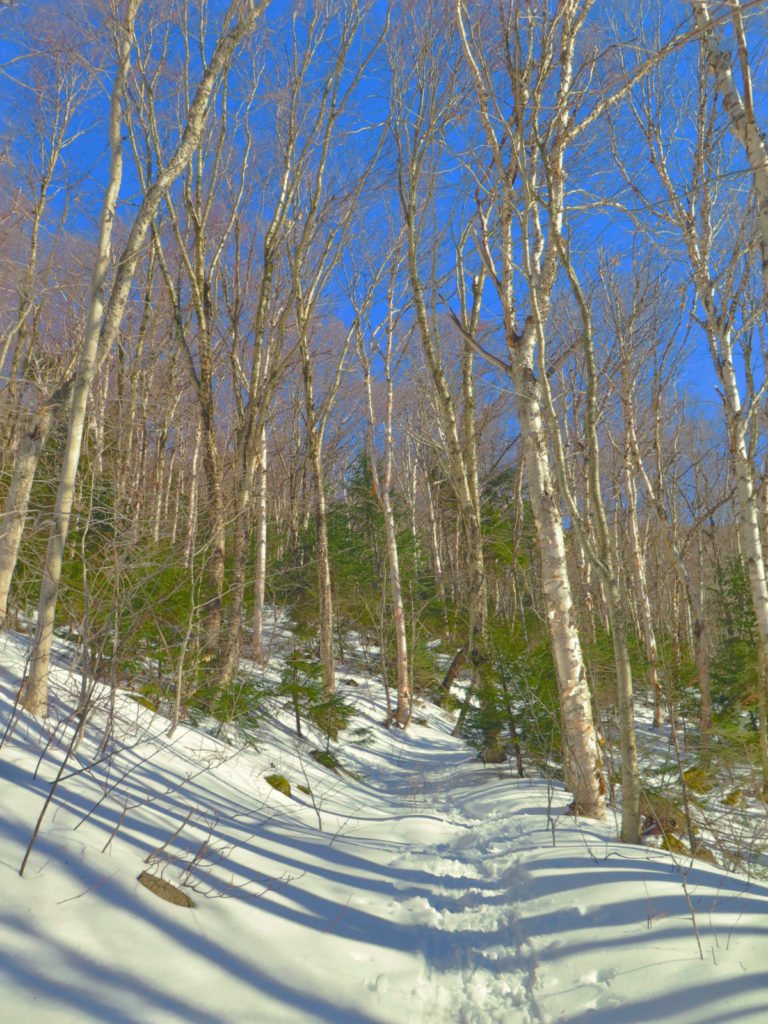 Scaur Ridge Trail with deep blue sky and trees