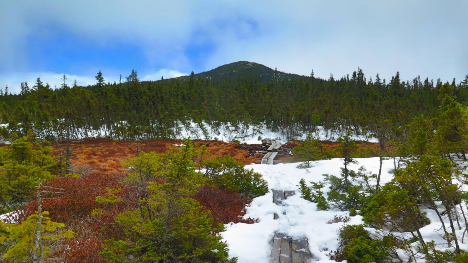 Jax-From-Alpine-Bog-20180501