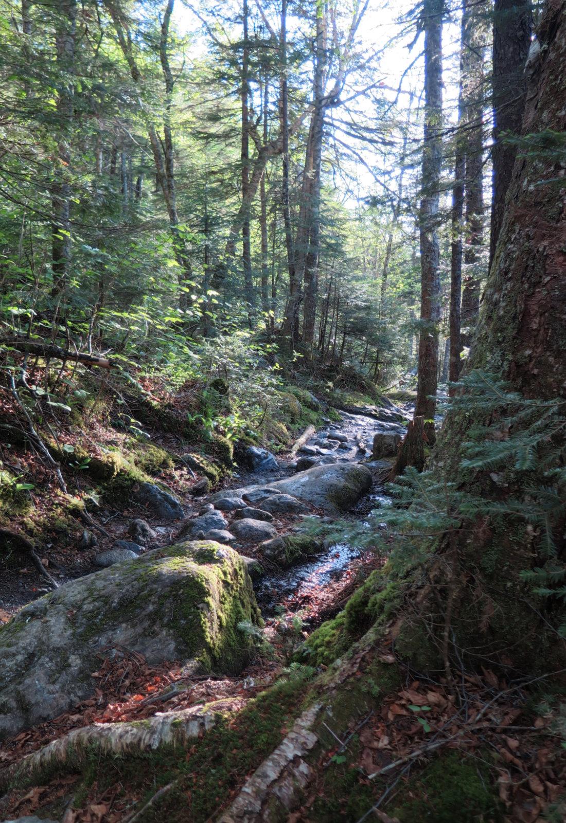20180602-Ammonoosuc-trail