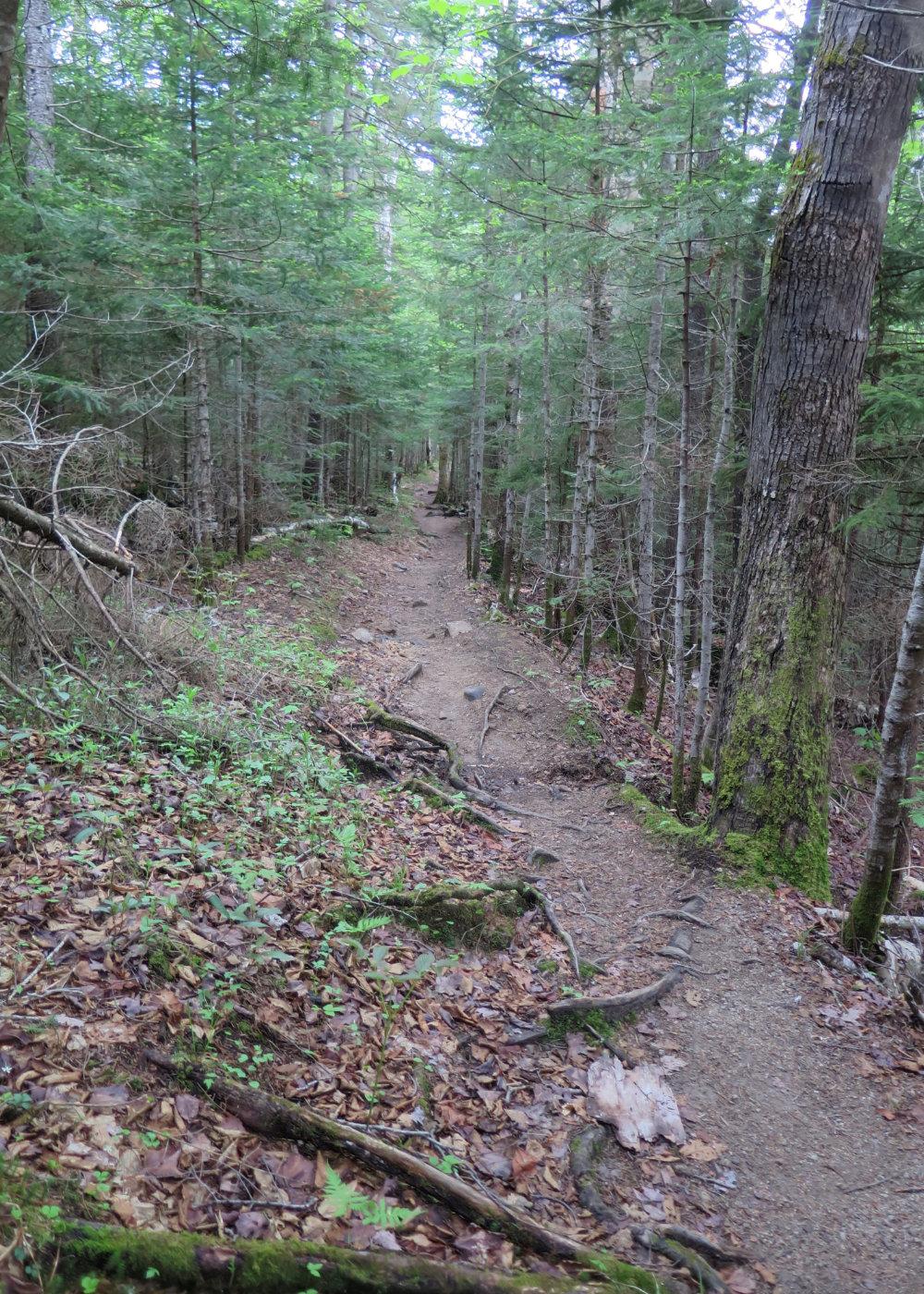 20180607-Hancock-Dry-Trail