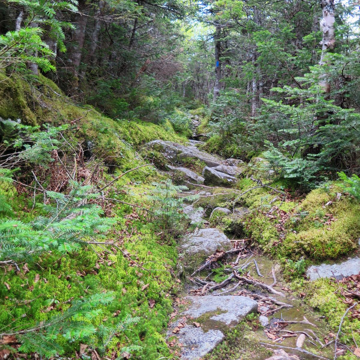 20180616-Trail-Moss