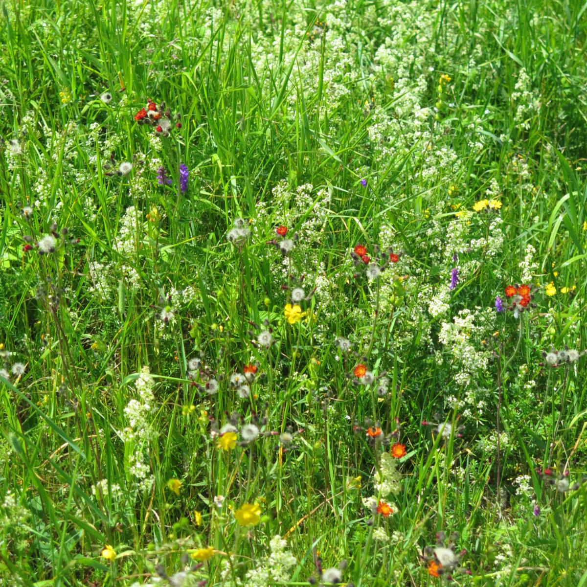 20180716-AbrahamEllen-Wildflowers
