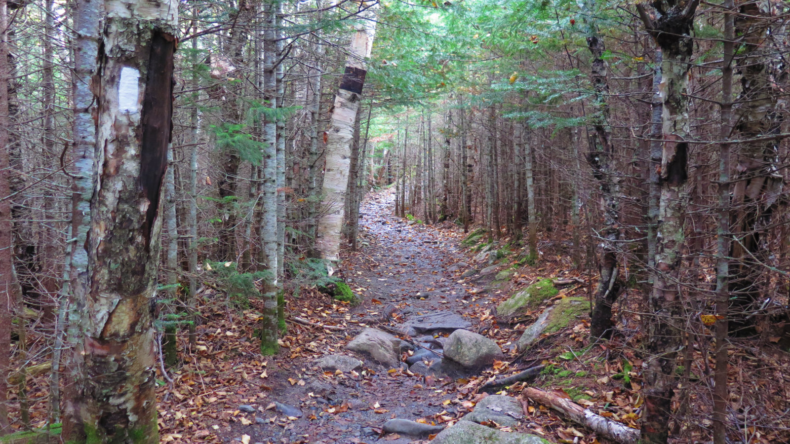 Katahdin-Tree-Trail-20181004