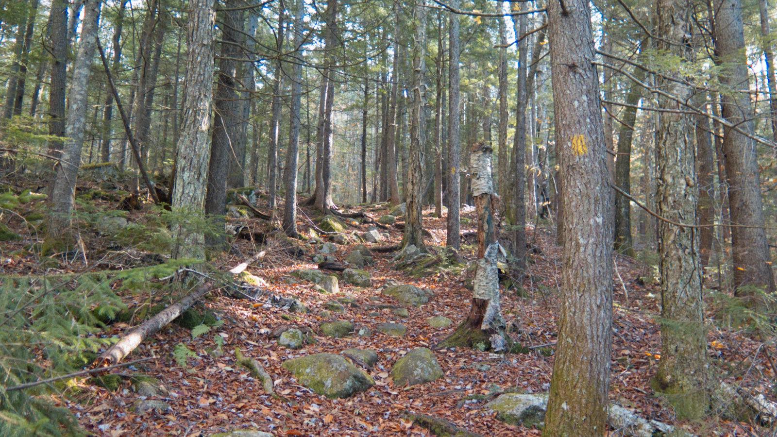 Jennings-Peak-Sandwich-Trail-20181108