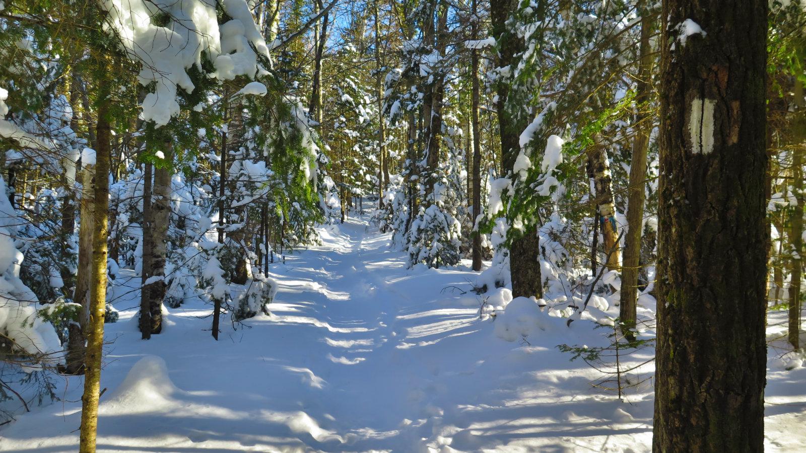 Moosilauke-Trail1-20190117