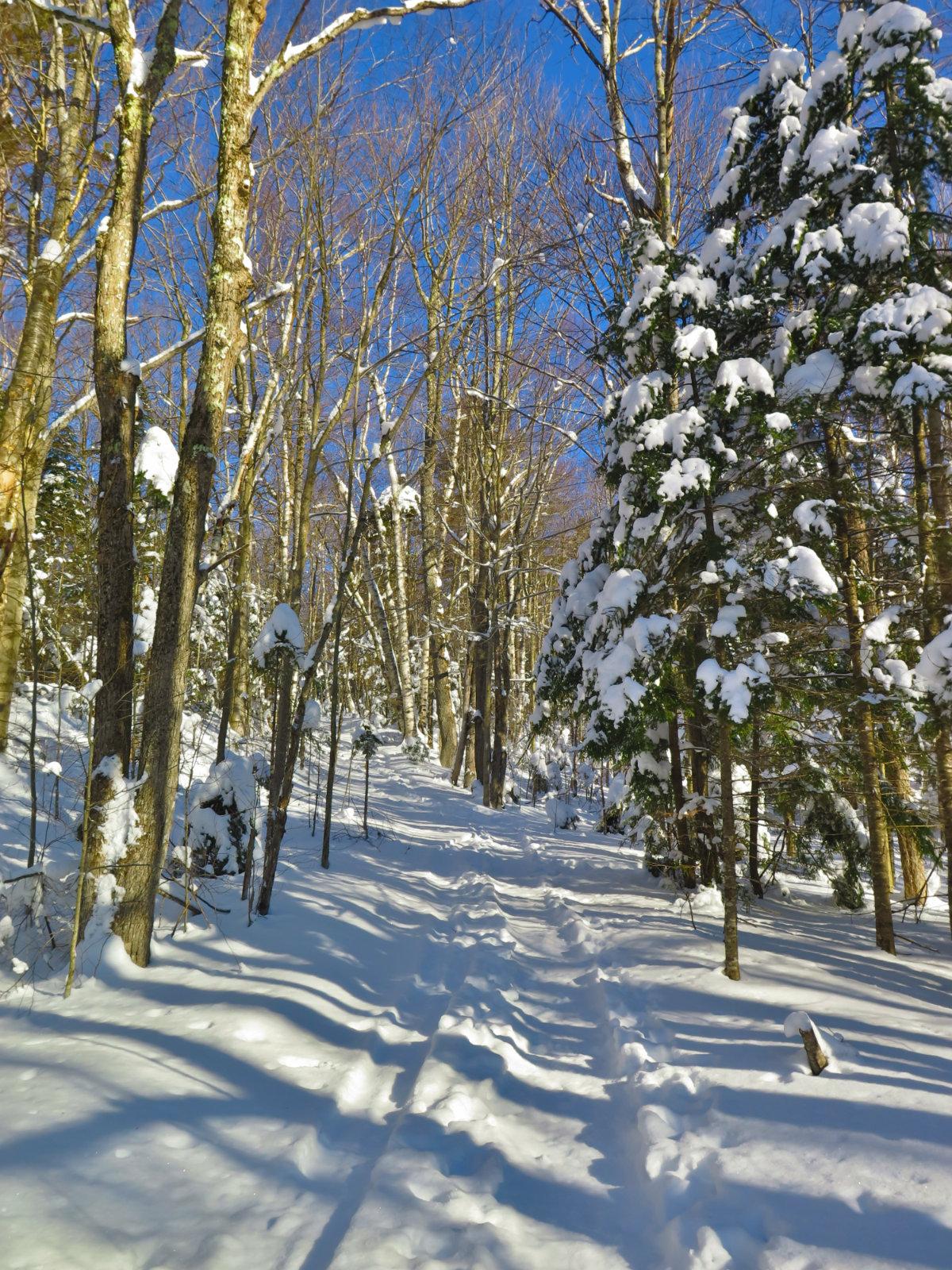 Moosilauke-Trail2-20190117