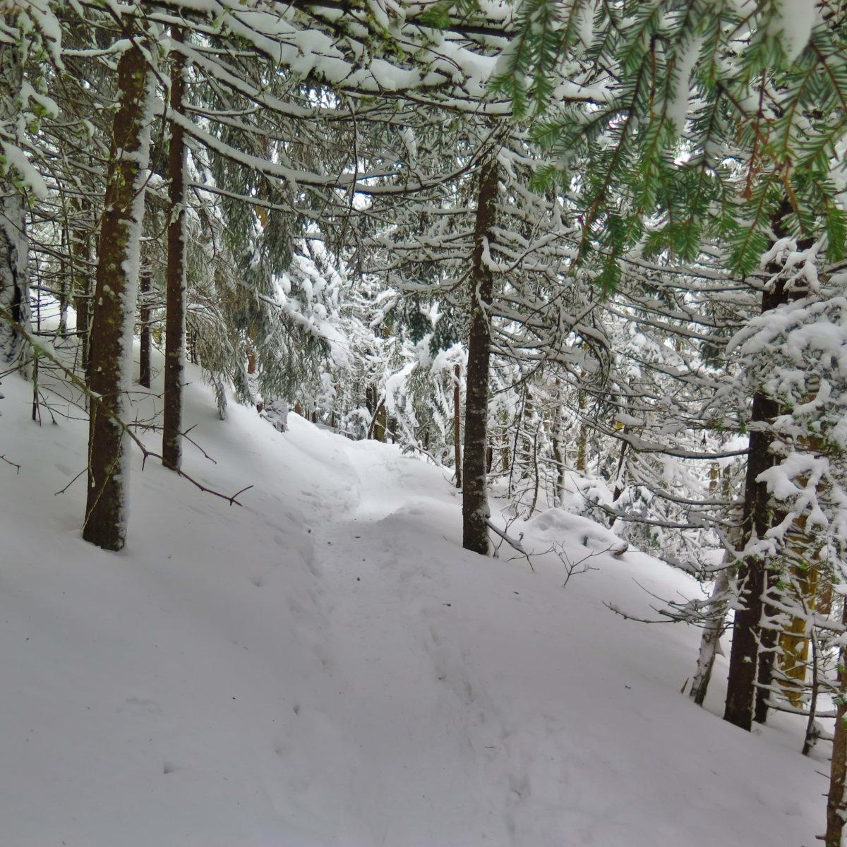 Waumbek-Trail-Uphill-20190202