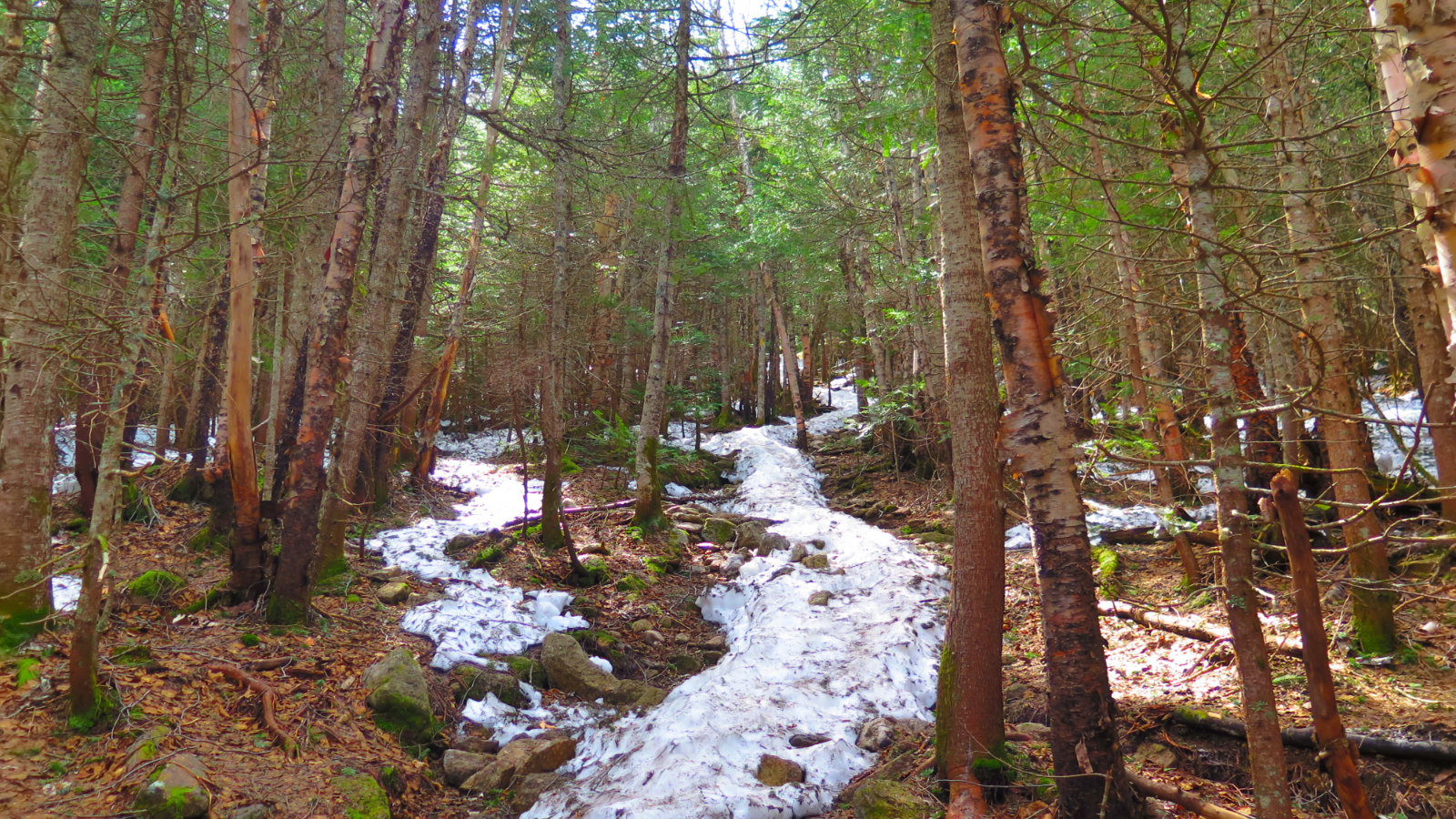 Tecumseh-Trail3-20190522
