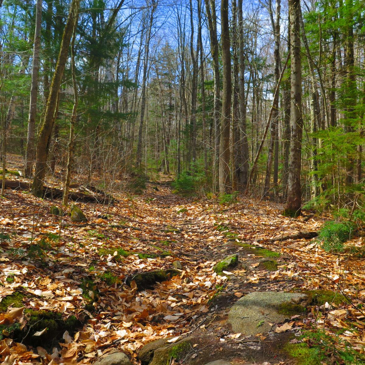 Trail-Mt-Cube-20190509
