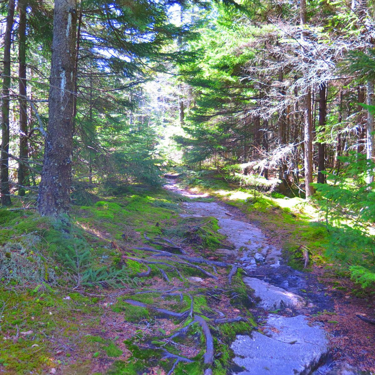 Trail2-Mt-Cube-20190509