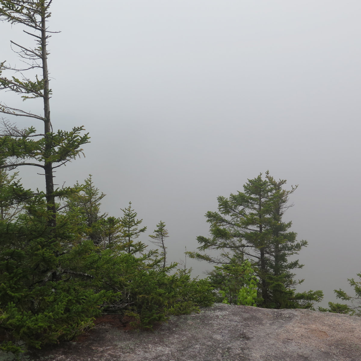 Thick fog obscuring the view from Noon Peak, White Mountain National Forest, New Hampshire.