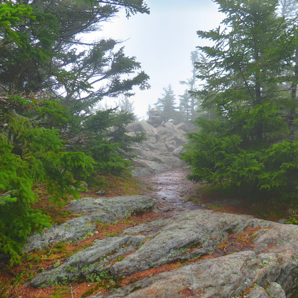 Summit of Sandwich Mountain, White Mountain National Forest, New Hampshire.