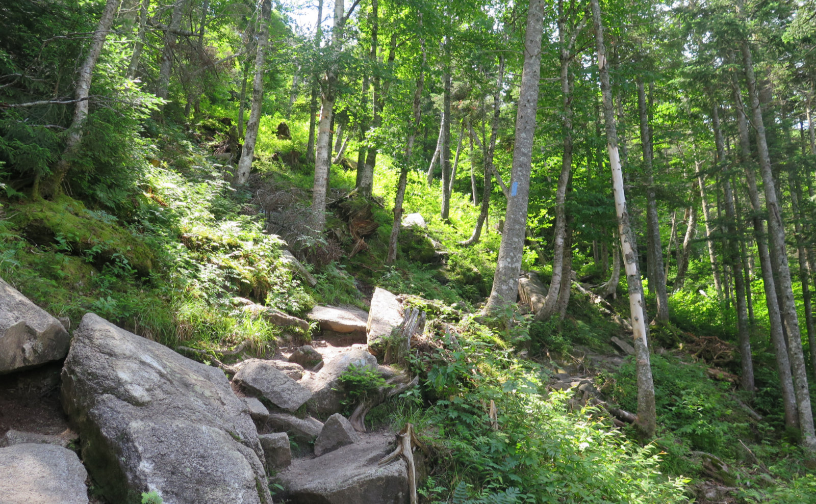 Kinsman_Ridge_Trail_Cannon_20190715
