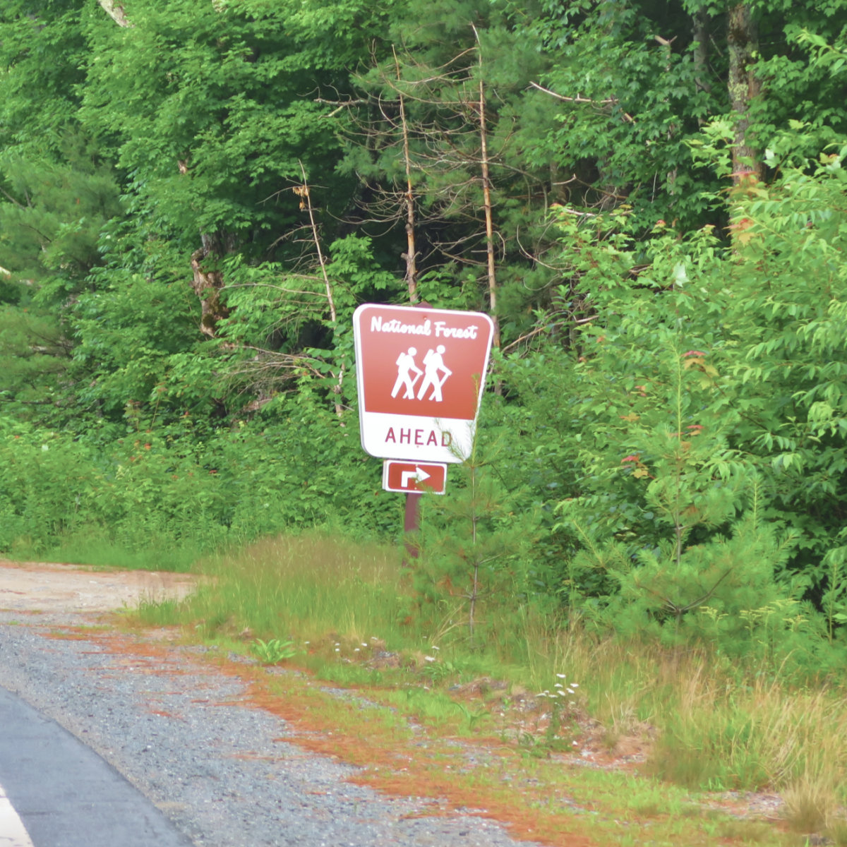 Reel_Brook_Road_Sign_20190713