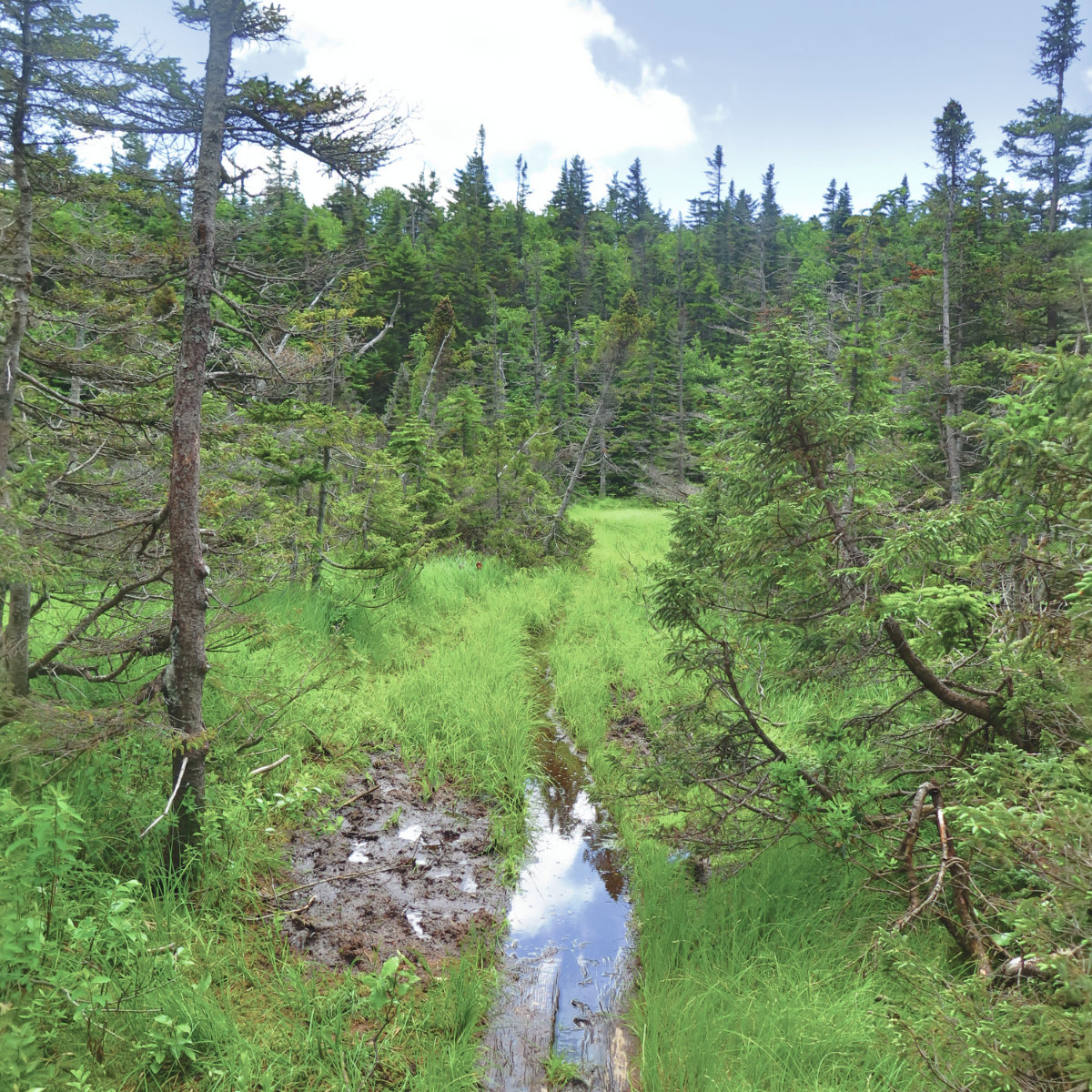 South_Kinsman_Bog_Trail_20190713