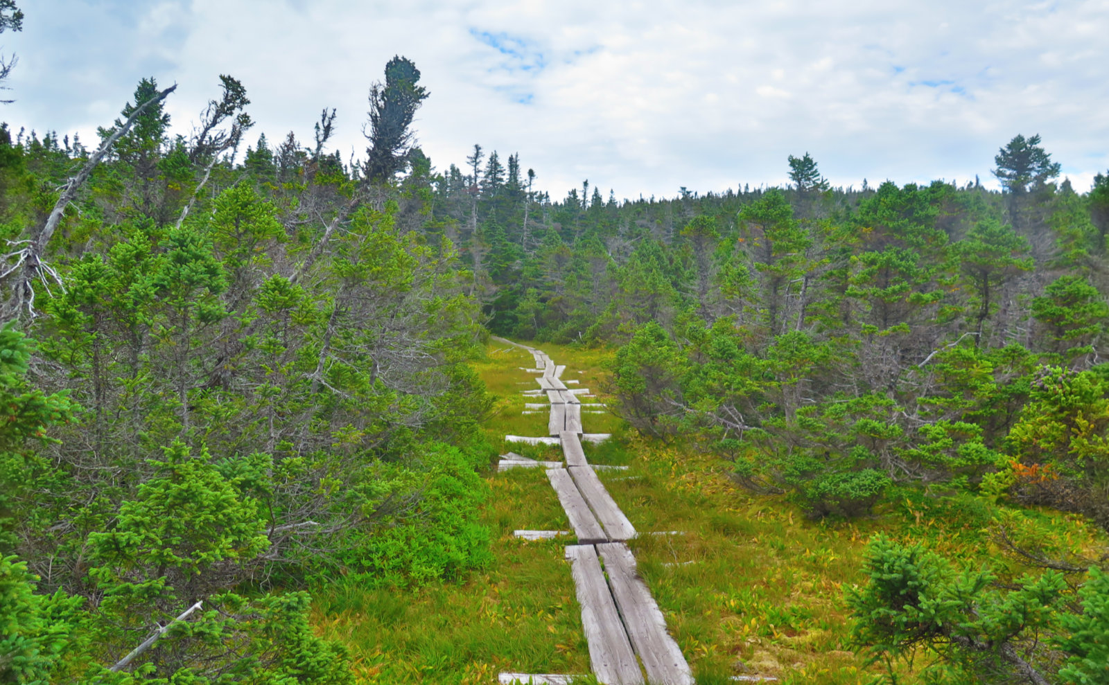 Bog-Bridge-Carter-Ridge-20190822