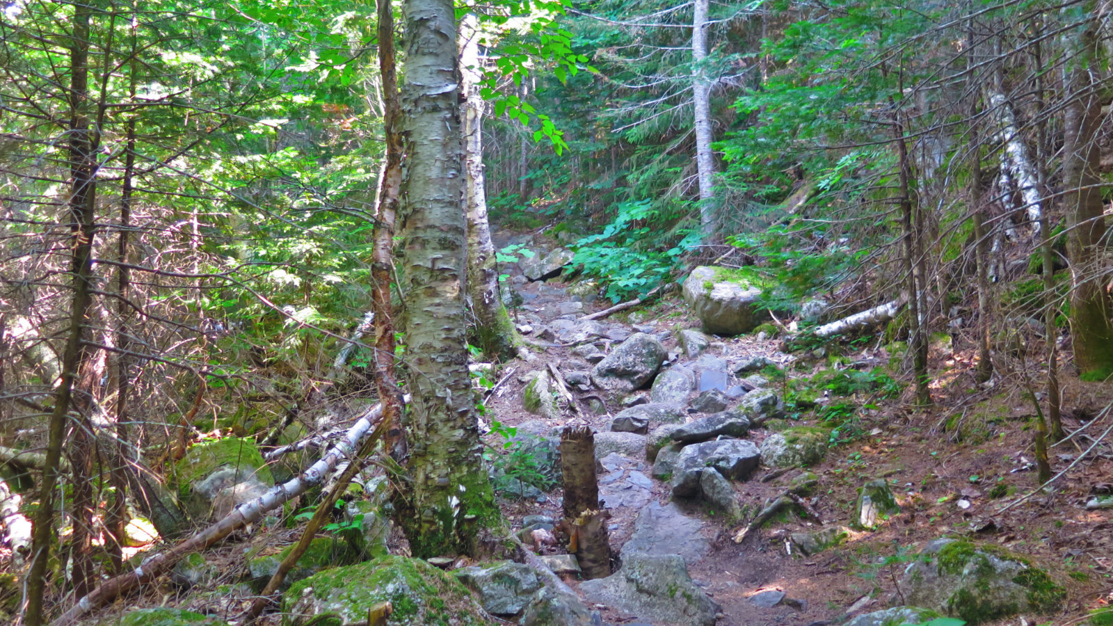 Rough_Trail_Carrigain_20190803