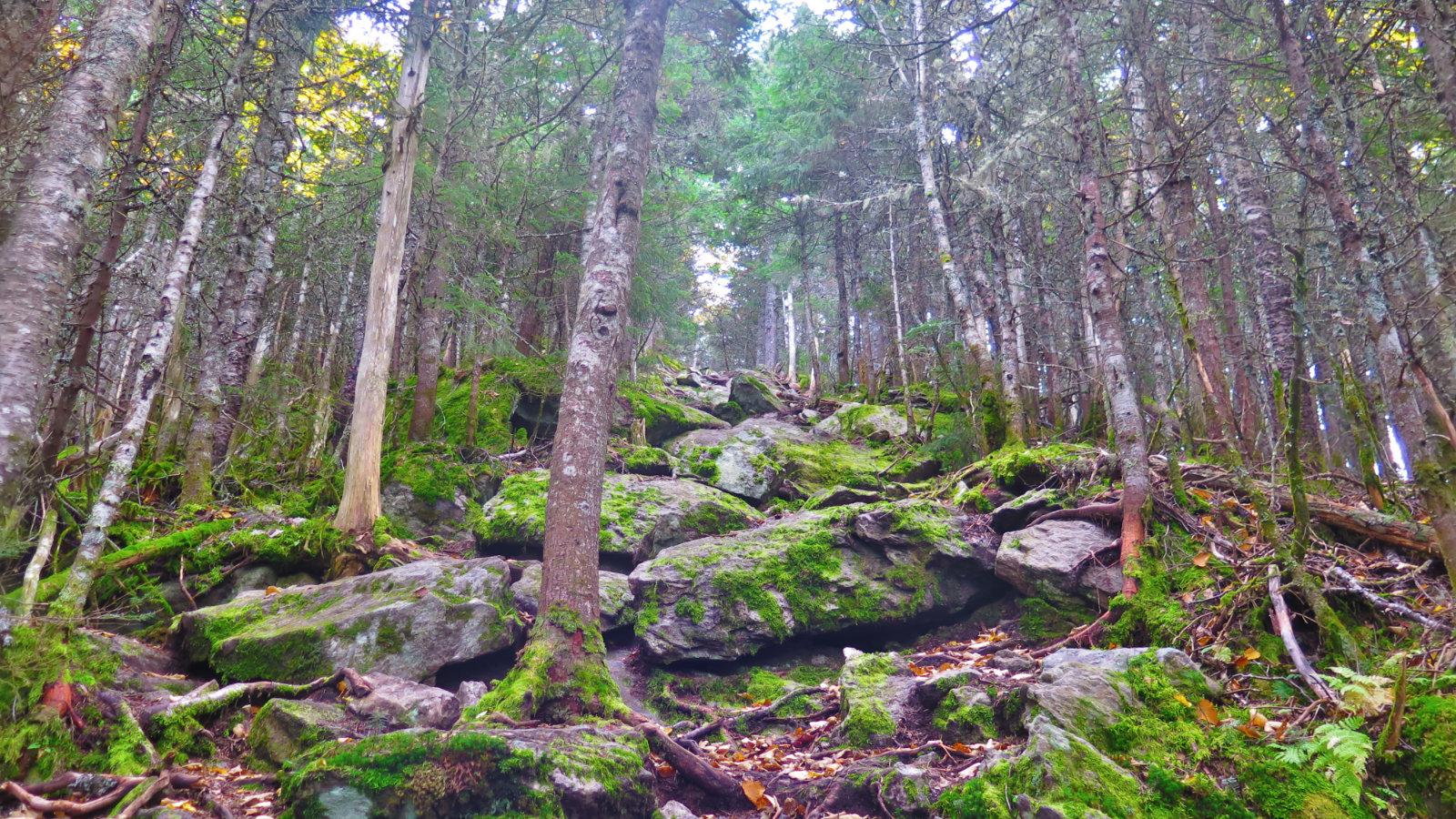 Tecumseh-Steep-Trail-20190926