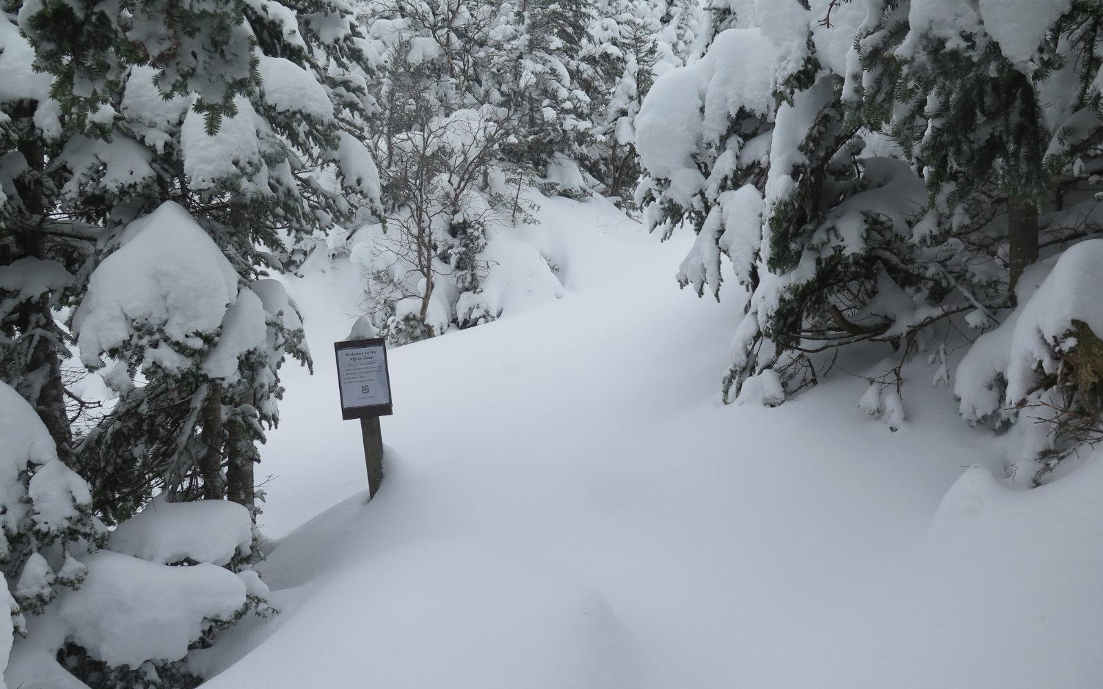 Alpine-Zone-Ammo-20191204