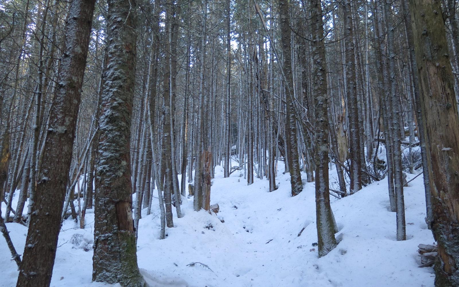 Frosty-Trees-Kinsman-20191212
