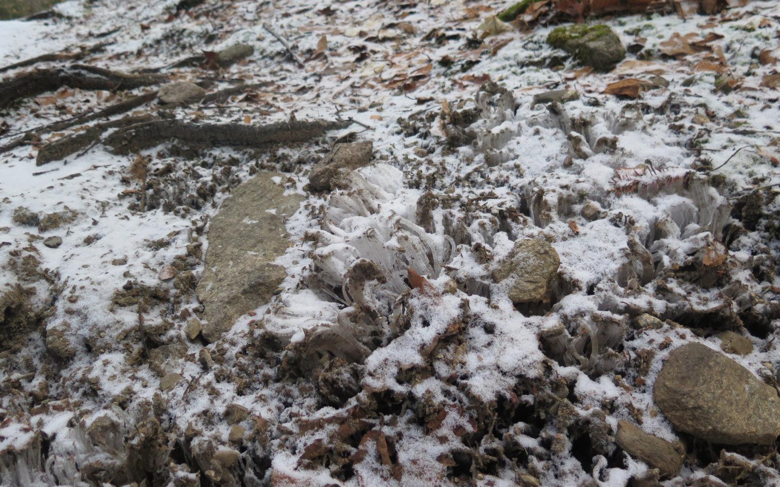 Needle-Ice-Kinsman-20191212
