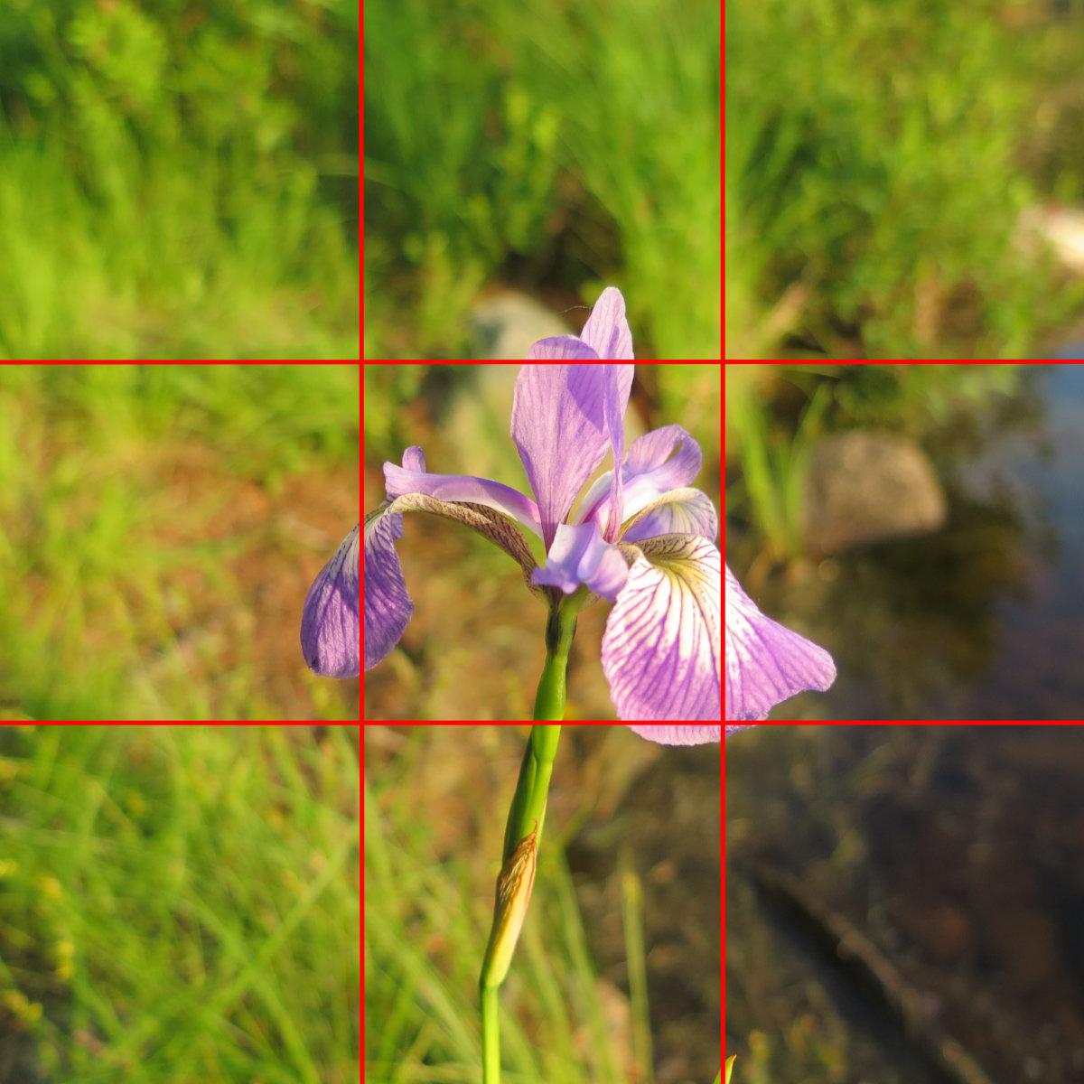 Blog-Example-Iris-Prismatica-Katahdin-BSP-20190704