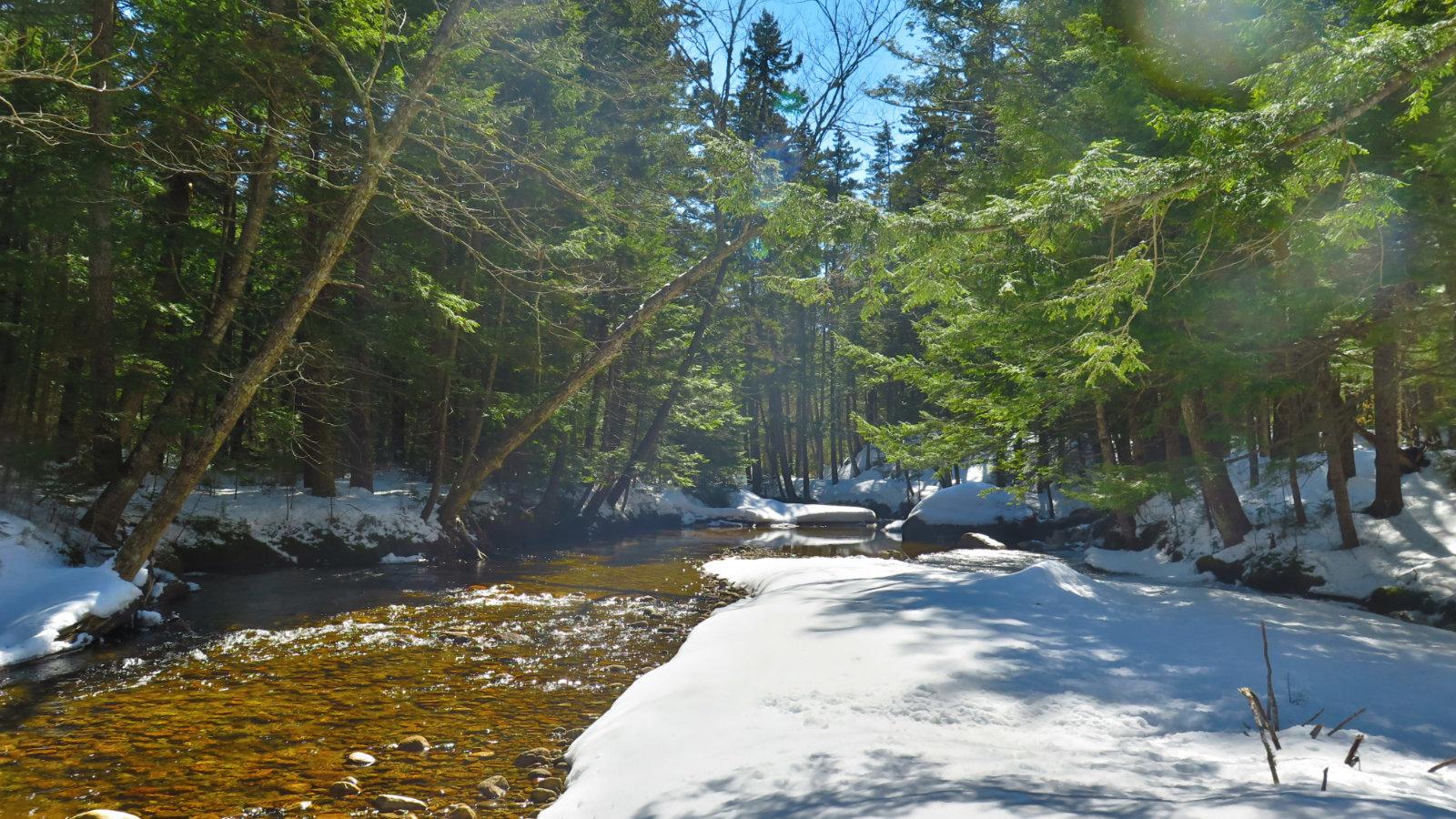 Oliverian-Trail-Brook-20200326