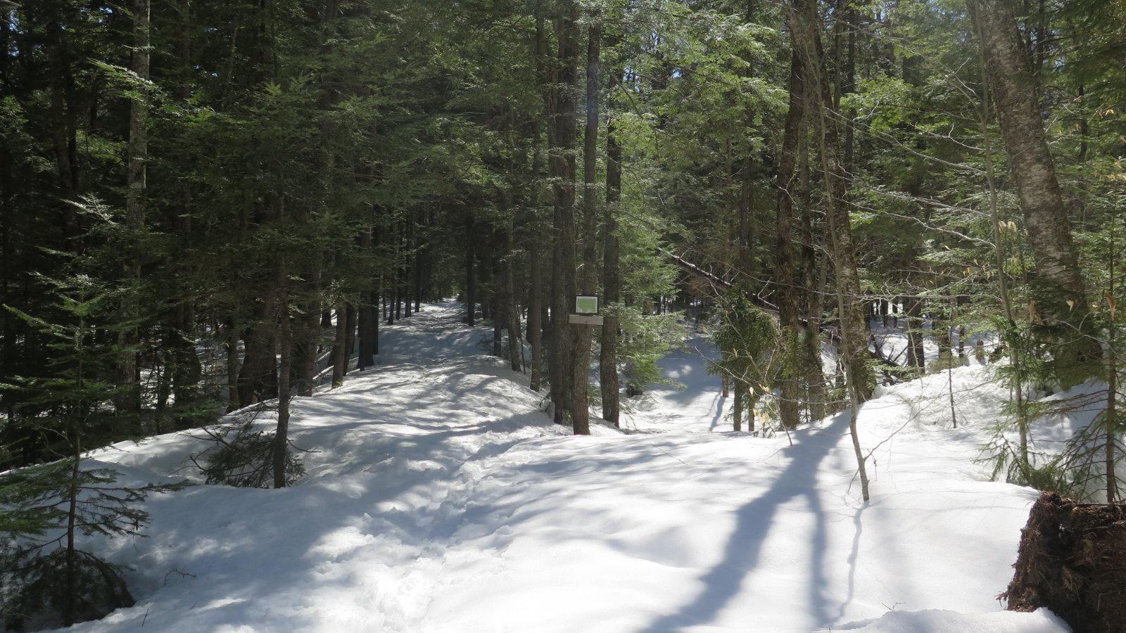 Oliverian-Trail-Ski-Trail-Split-20200326