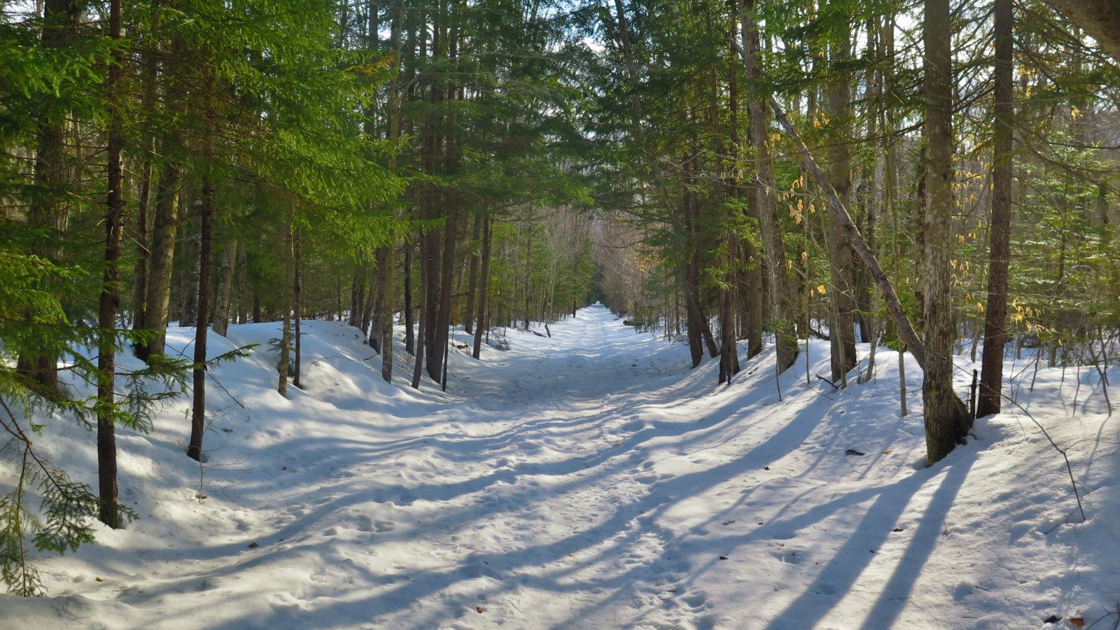 Pemi-East-Side-Lincoln-Woods-Trail-20200303