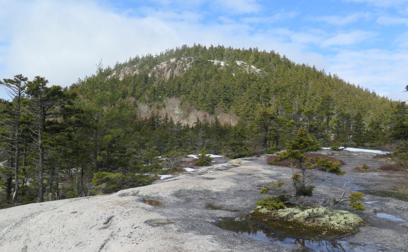 UNH-Hedgehog-Summit-Cliffs-20200404