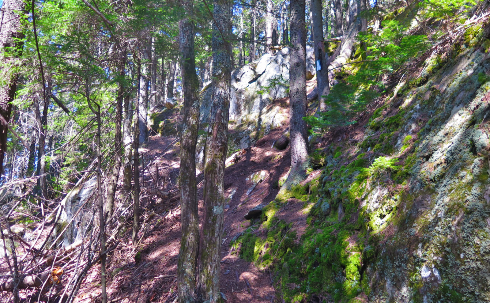 12-Steep-Up-Trail-Ragged-20200520