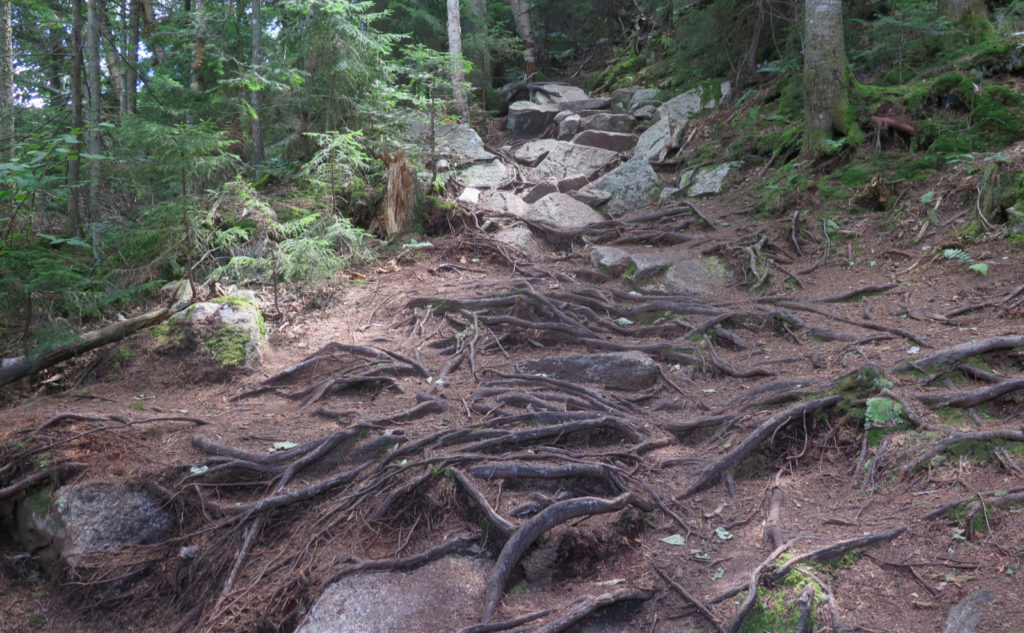 Rocks and roots on Tecumseh trail.