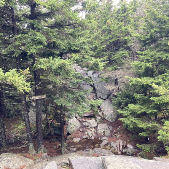 Mt Monadnock Pumpelly Trail