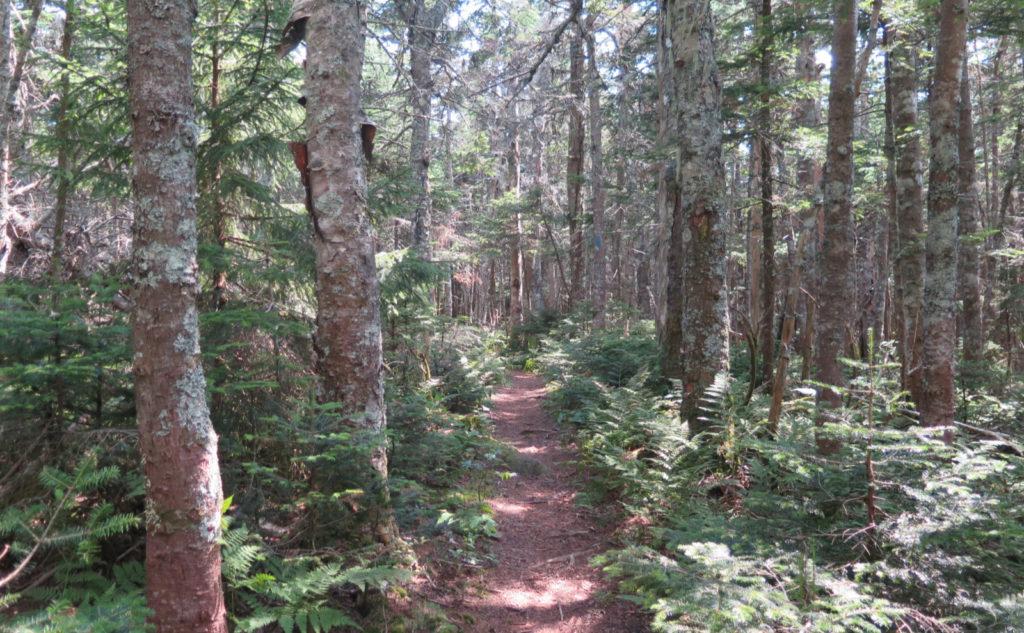 Sosman Trail, around the midpoint.